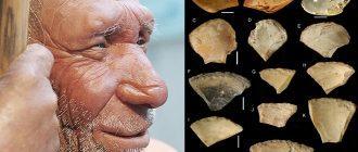 Учёные выяснили, для чего неандертальцы ныряли на большие глубины 50 000 лет назад