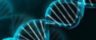 Генетики: Белорусы и поляки — братья-близнецы, русские — даже не славяне
