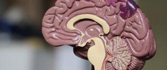 Ученые опровергли особую роль дофамина в мозге человека